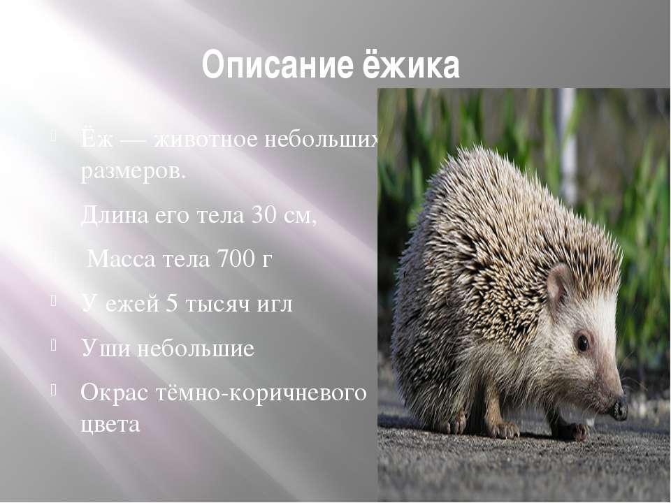 Описание ёжика Ёж— животное небольших размеров. Длина его тела 30см, Масса ...