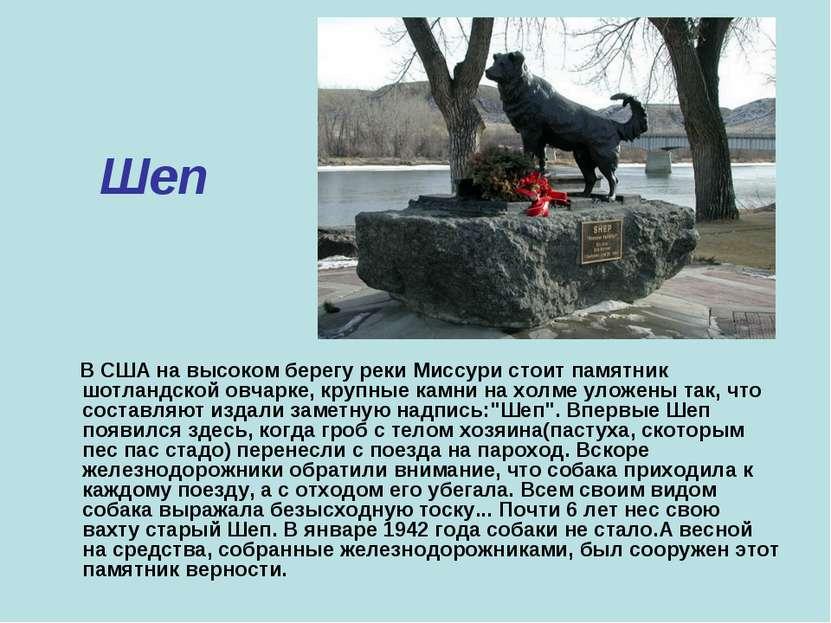 Шеп В США на высоком берегу реки Миссури стоит памятник шотландской овчарке, ...