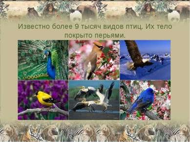 Известно более 9 тысяч видов птиц. Их тело покрыто перьями.