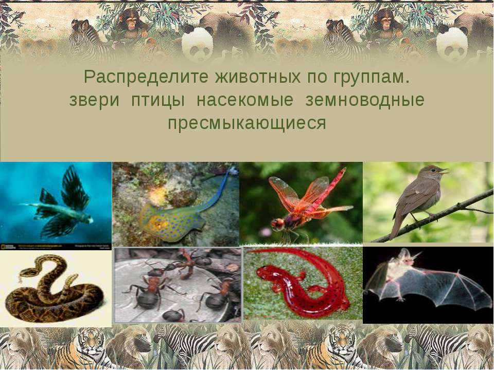 Распределите животных по группам. звери птицы насекомые земноводные пресмыкаю...