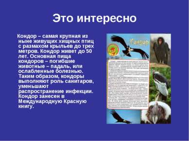 Это интересно Кондор – самая крупная из ныне живущих хищных птиц с размахом к...