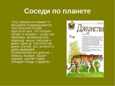 Соседи по планете Тигр прекрасно плавает и бесшумно подкрадывается. При сильн...