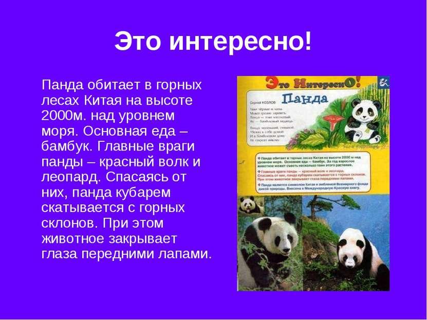 Это интересно! Панда обитает в горных лесах Китая на высоте 2000м. над уровне...