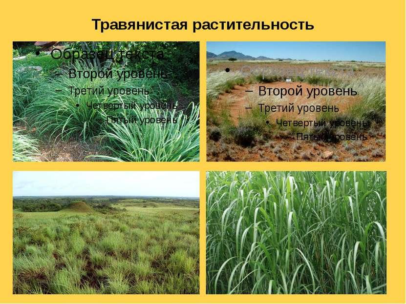 Травянистая растительность