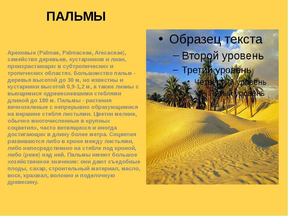 ПАЛЬМЫ Арековые (Palmae, Palmaceae, Arecaceae), семейство деревьев, кустарник...