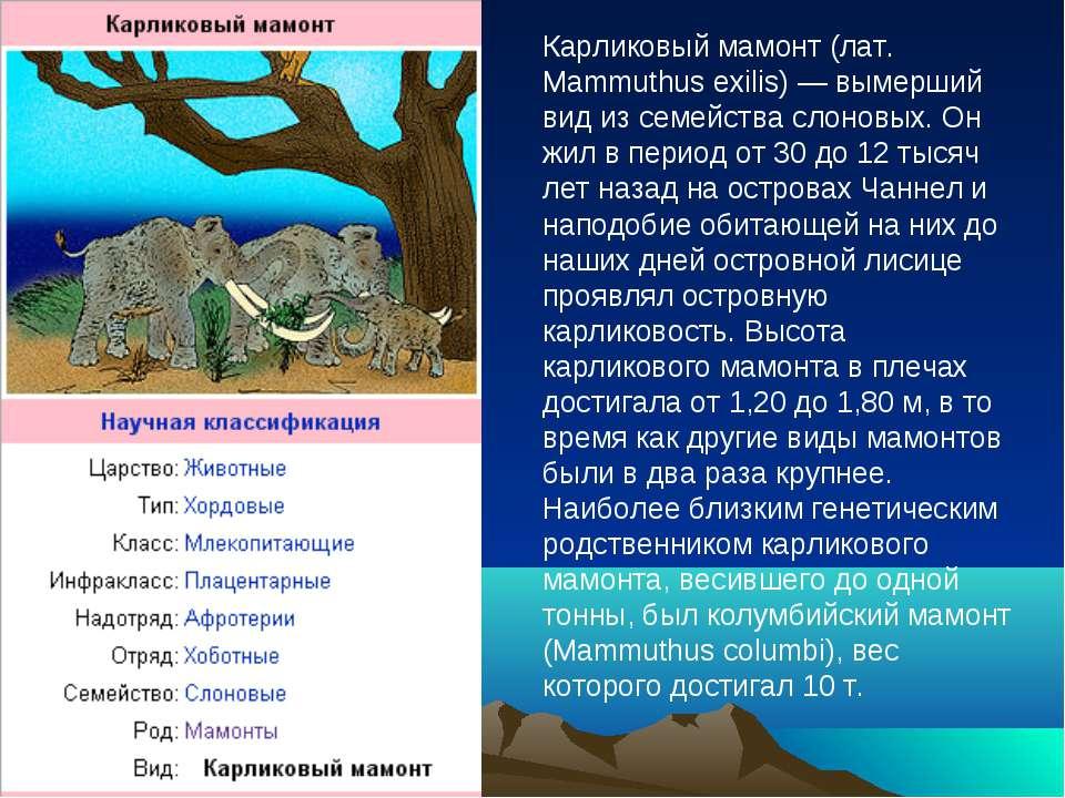 Карликовый мамонт (лат. Mammuthus exilis) — вымерший вид из семейства слоновы...