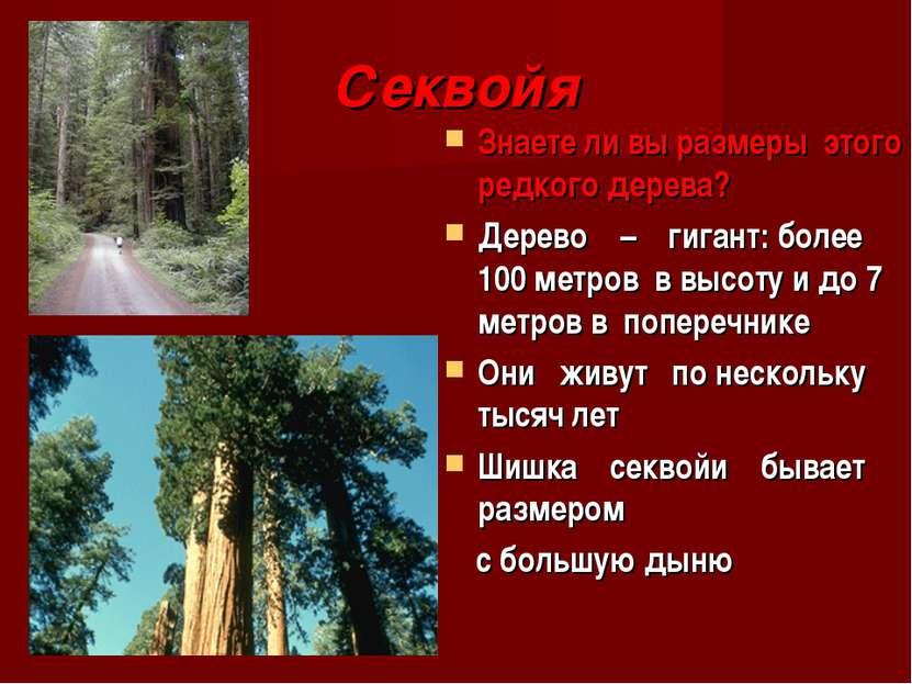 Секвойя Знаете ли вы размеры этого редкого дерева? Дерево – гигант: более 100...