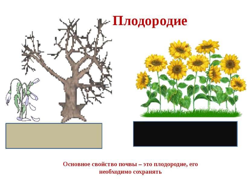 Плодородие Основное свойство почвы – это плодородие, его необходимо сохранять