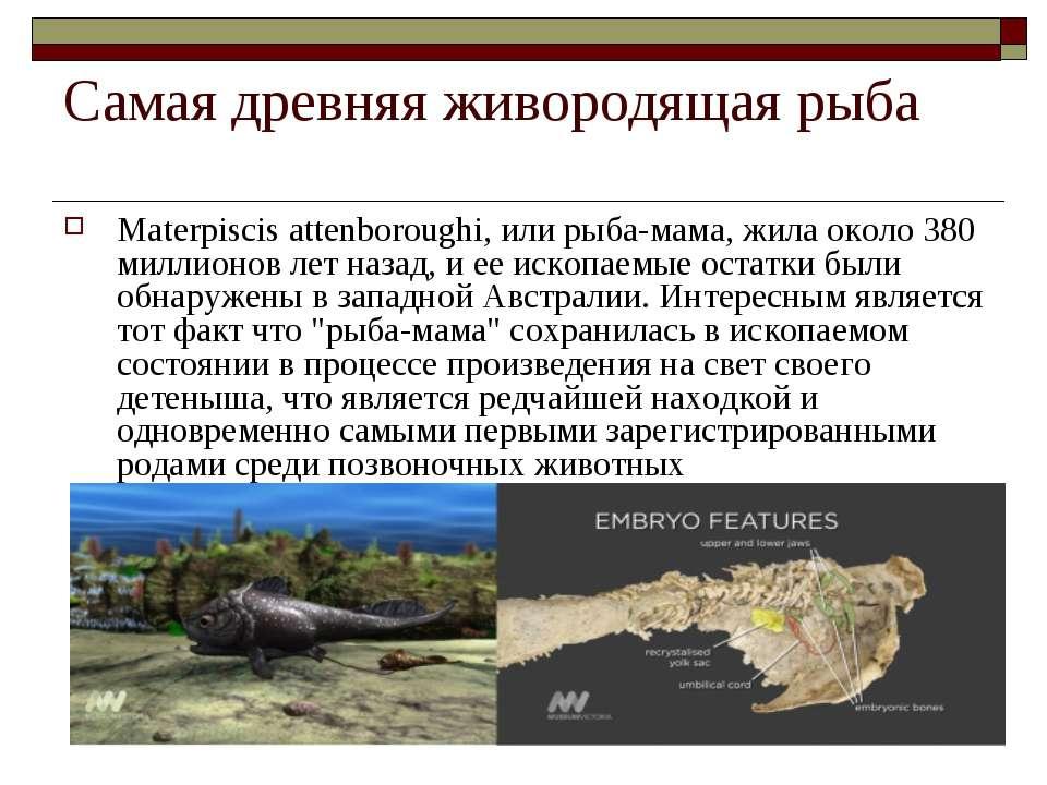 Самая древняя живородящая рыба Materpiscis attenboroughi, или рыба-мама, жила...