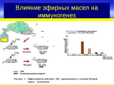 Влияние эфирных масел на иммуногенез