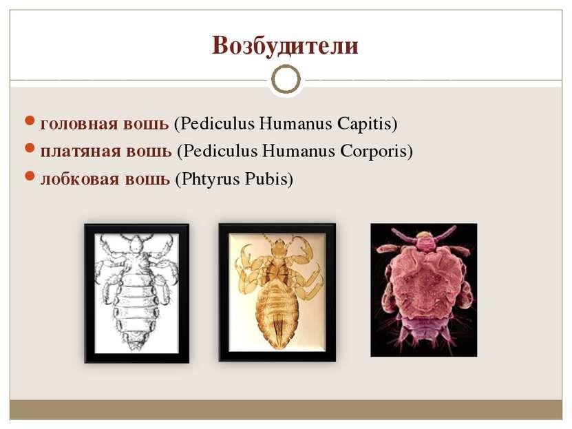 Возбудители головная вошь (Pediculus Humanus Capitis) платяная вошь (Pediculu...