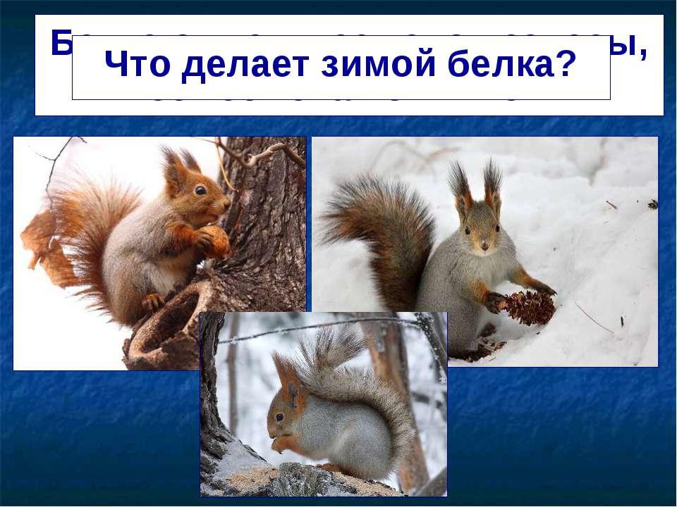 Белка отыскивает свои запасы, ест семена из шишек. Что делает зимой белка?