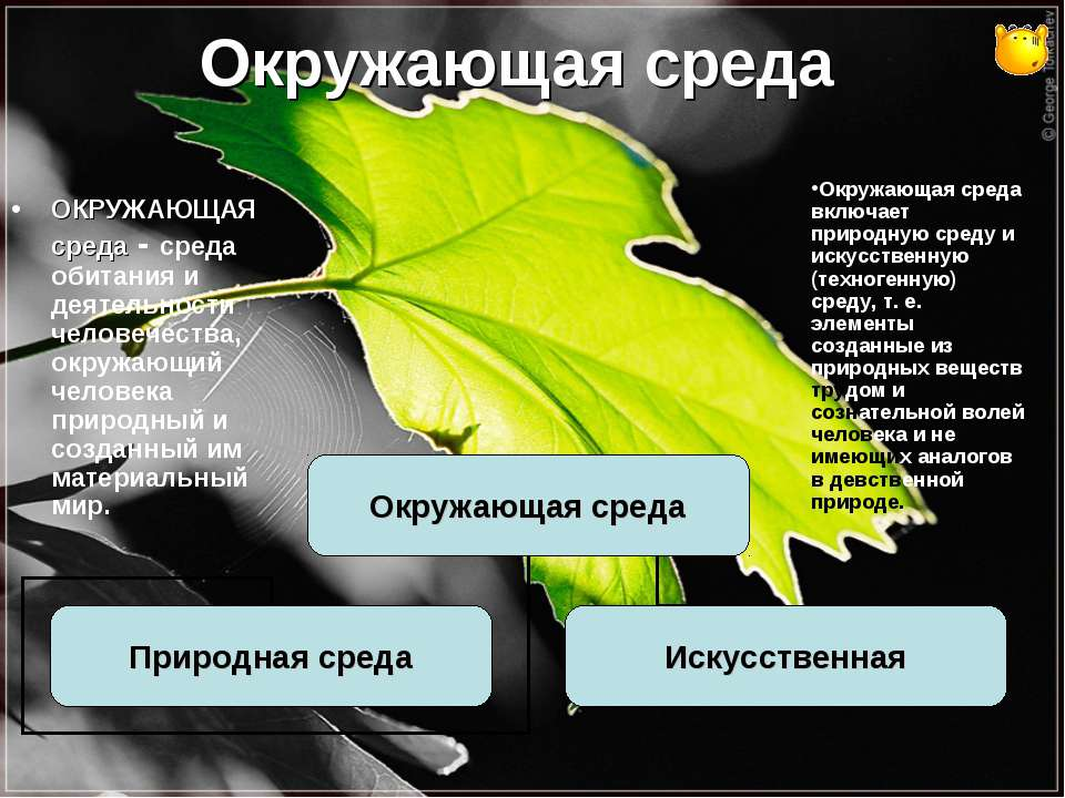 Окружающая среда ОКРУЖАЮЩАЯ среда - среда обитания и деятельности человечеств...