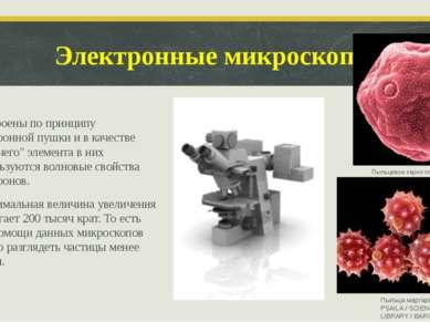 """Электронные микроскопы Построены по принципу электронной пушки и в качестве """"..."""