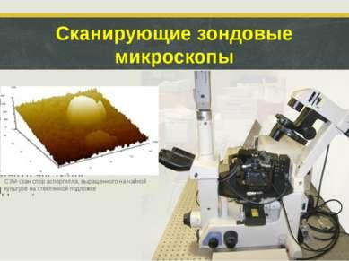 Сканирующие зондовые микроскопы Создают трехмерное изображение изучаемого объ...
