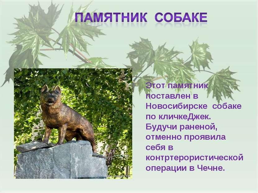 Этот памятник поставлен в Новосибирске собаке по кличкеДжек. Будучи раненой, ...