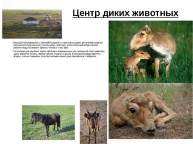 Центр диких животных Большой популярностью у жителей Калмыкии и туристов из д...