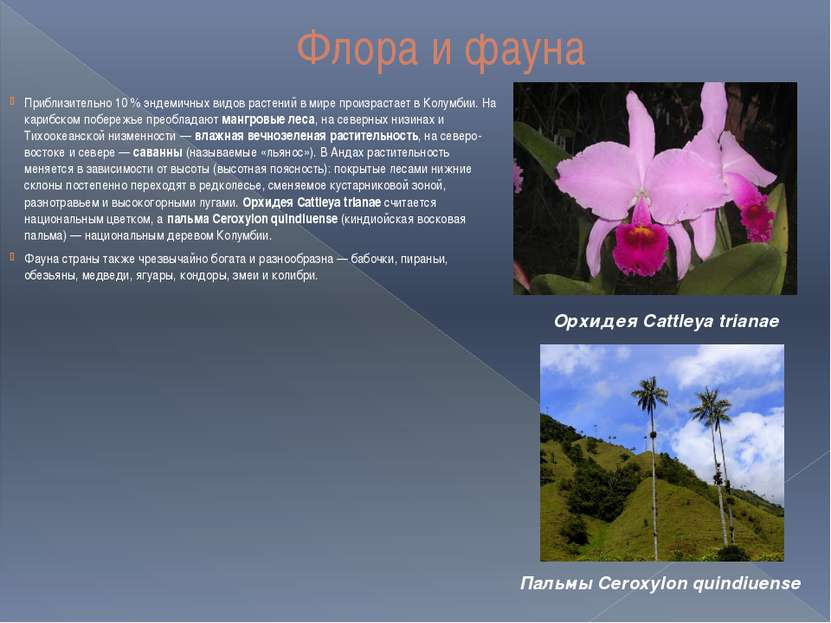 Флора и фауна Приблизительно 10 % эндемичных видов растений в мире произраста...