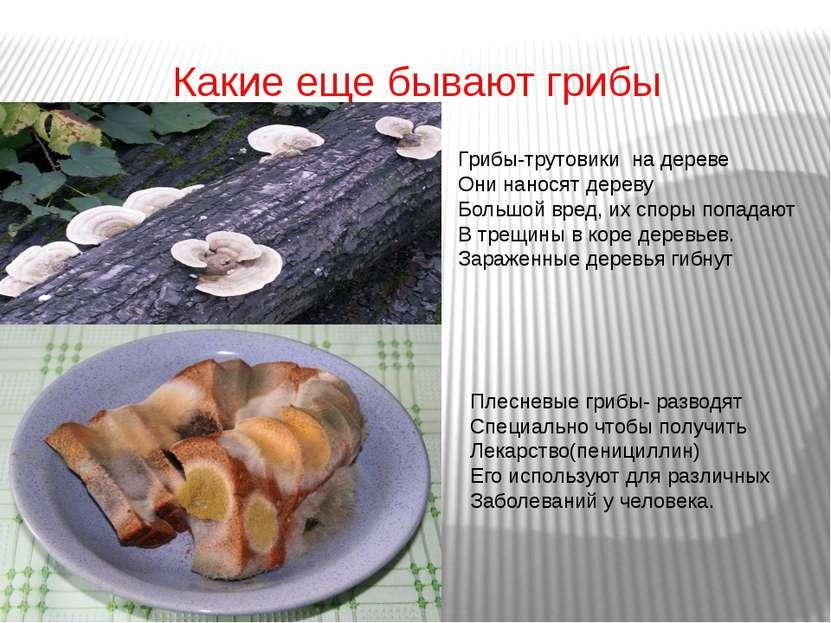 Какие еще бывают грибы Грибы-трутовики на дереве Они наносят дереву Большой в...