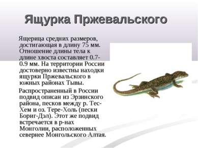 Ящурка Пржевальского Ящерица средних размеров, достигающая в длину 75 мм. Отн...