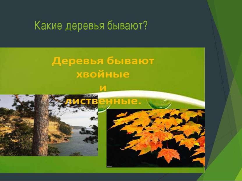 Какие деревья бывают?