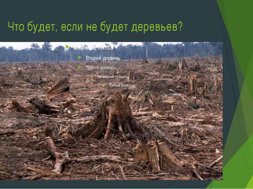 Что будет, если не будет деревьев?