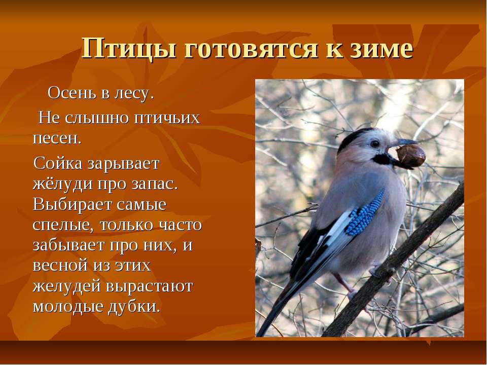 Птицы готовятся к зиме Осень в лесу. Не слышно птичьих песен. Сойка зарывает ...