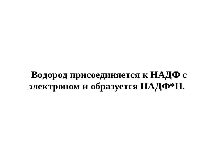 Водород присоединяется к НАДФ с электроном и образуется НАДФ*Н.