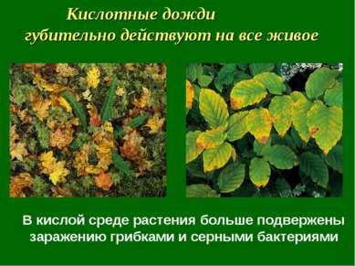 В кислой среде растения больше подвержены заражению грибками и серными бактер...