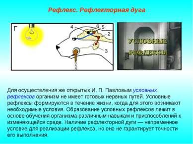 Рефлекс. Рефлекторная дуга Для осуществления же открытых И. П. Павловым услов...