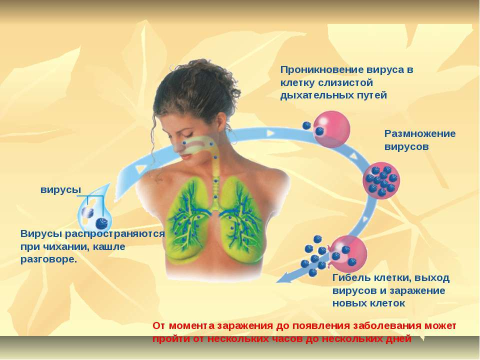 Вирусы распространяются при чихании, кашле разговоре. вирусы Проникновение ви...