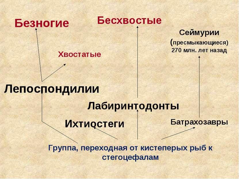 Группа, переходная от кистеперых рыб к стегоцефалам Батрахозавры Ихтиостеги Л...