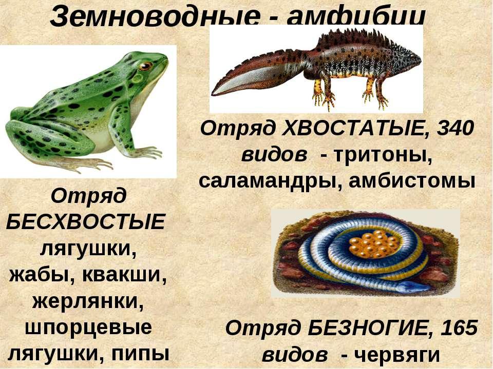 Земноводные - амфибии Отряд БЕСХВОСТЫЕ лягушки, жабы, квакши, жерлянки, шпорц...