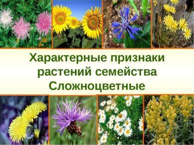 Характерные признаки растений семейства Сложноцветные