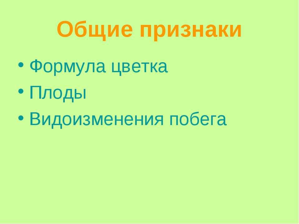 Общие признаки Формула цветка Плоды Видоизменения побега