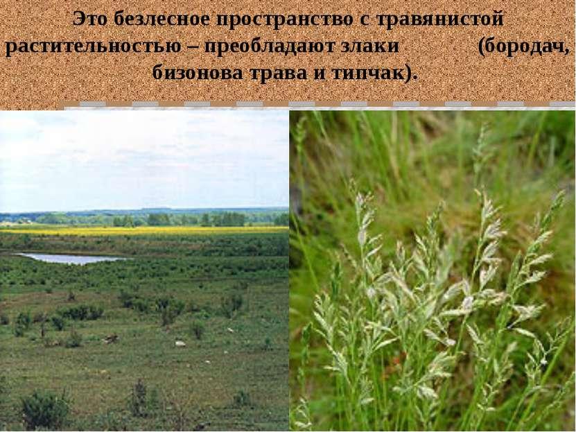 Это безлесное пространство с травянистой растительностью – преобладают злаки ...