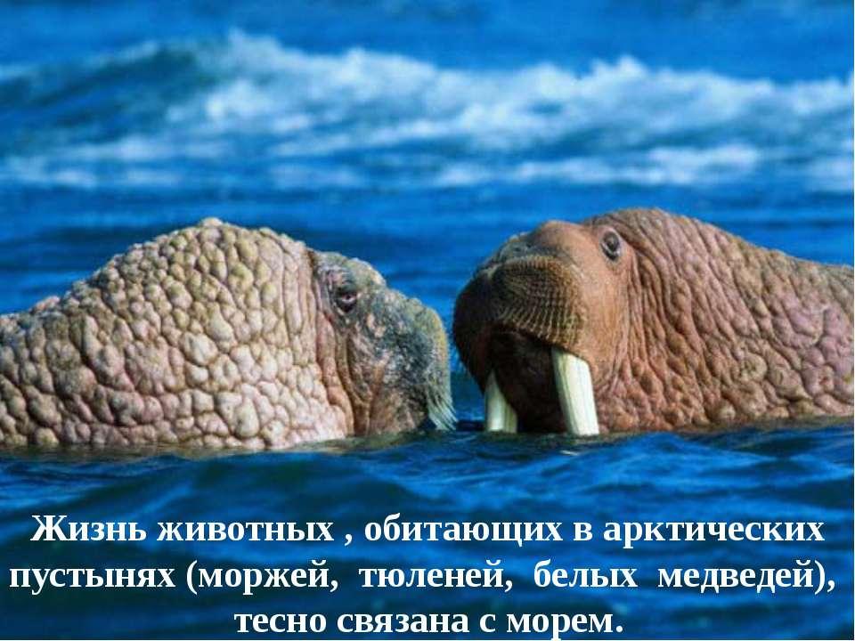 Жизнь животных , обитающих в арктических пустынях (моржей, тюленей, белых мед...
