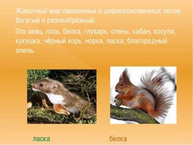 Животный мир смешанных и широколиственных лесов богатый и разнообразный. Это ...