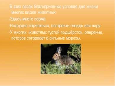 В этих лесах благоприятные условия для жизни многих видов животных. -Здесь мн...