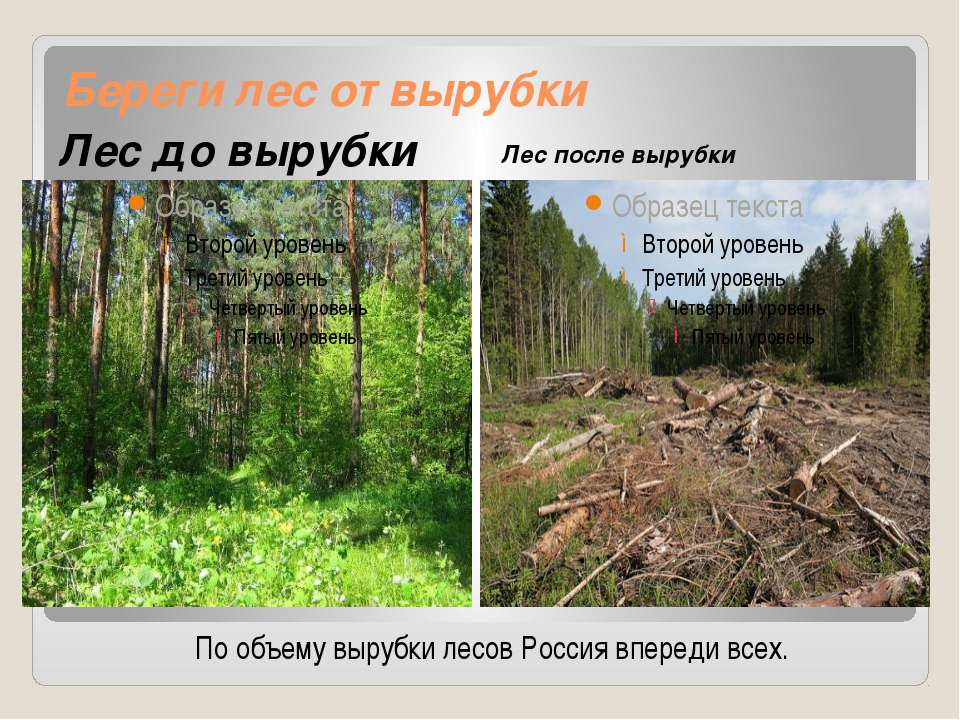 Береги лес от вырубки Лес до вырубки Лес после вырубки По объему вырубки лесо...