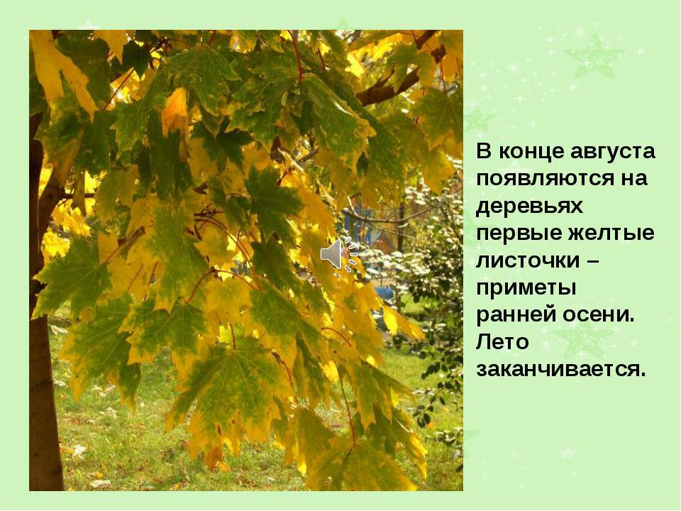 В конце августа появляются на деревьях первые желтые листочки – приметы ранне...