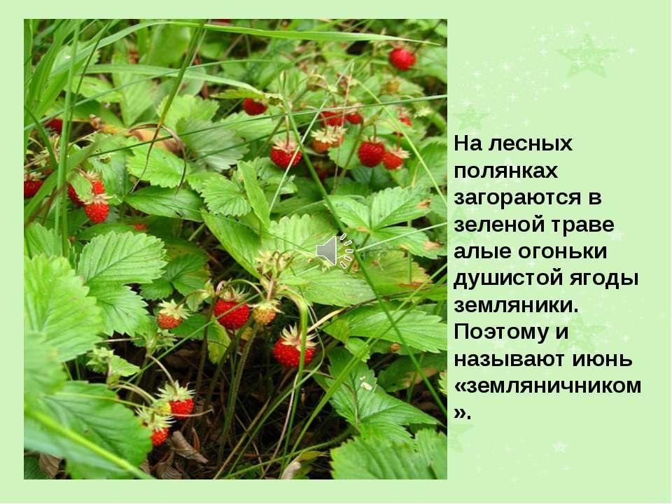 На лесных полянках загораются в зеленой траве алые огоньки душистой ягоды зем...
