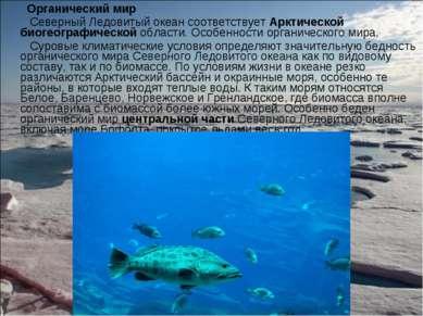 Органический мир Органический мир Северный Ледовитый океан соответствует Аркт...