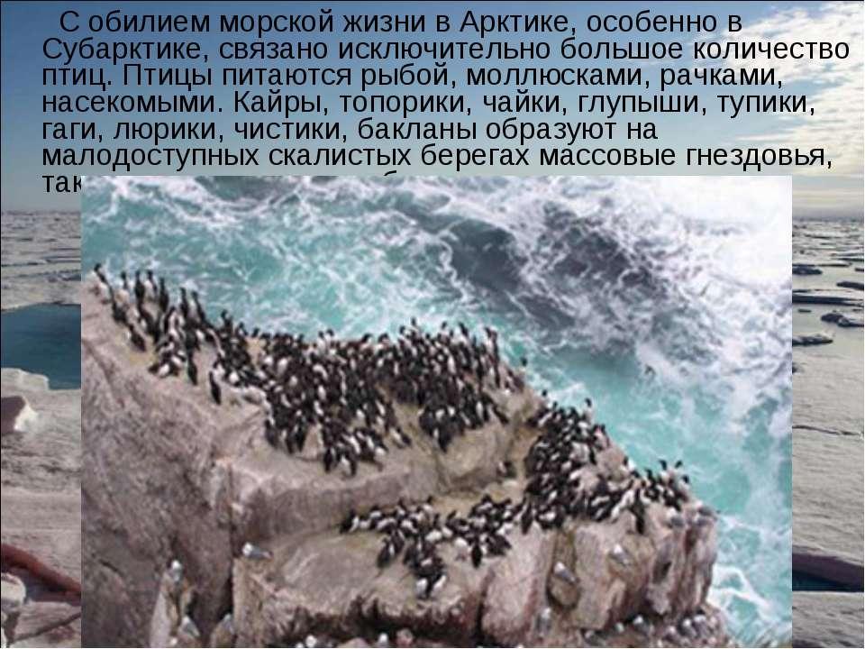 С обилием морской жизни в Арктике, особенно в Субарктике, связано исключитель...