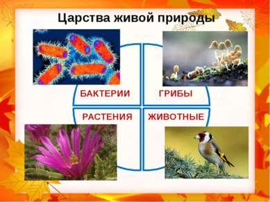 мухомор Распределите живые организмы по царствам, записывая их названия. дроз...