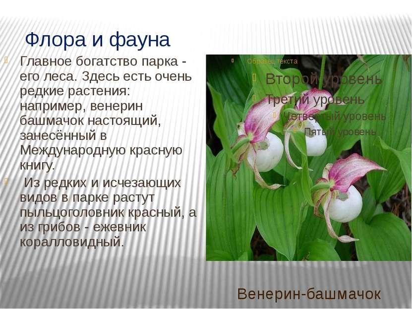 памятник природы Кузедеевский липовый остров – остаток теплолюбивых широколис...