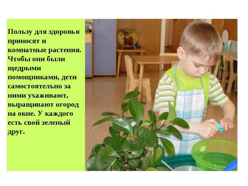 Пользу для здоровья приносят и комнатные растения. Чтобы они были щедрыми пом...