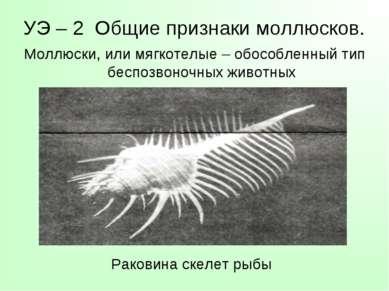 УЭ – 2 Общие признаки моллюсков. Моллюски, или мягкотелые – обособленный тип ...