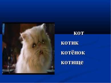 кот котик котёнок котище