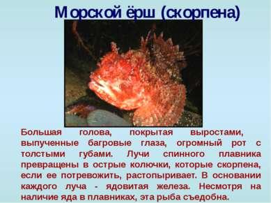 Морской ёрш (скорпена) Большая голова, покрытая выростами, выпученные багровы...